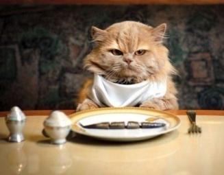 restaurantcat