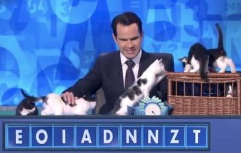 gameshowcat.jpg