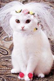 weddingcat