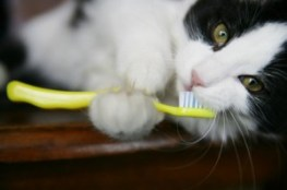 dentistcat