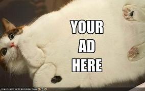 advertisingcat