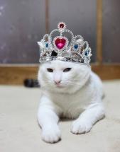 queencat