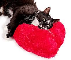flirtingcat
